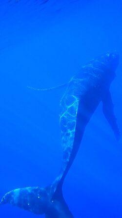 Une journée magnifique avec les baleines
