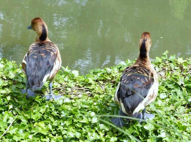 Les oiseaux du Parc de la Tête d'Or.