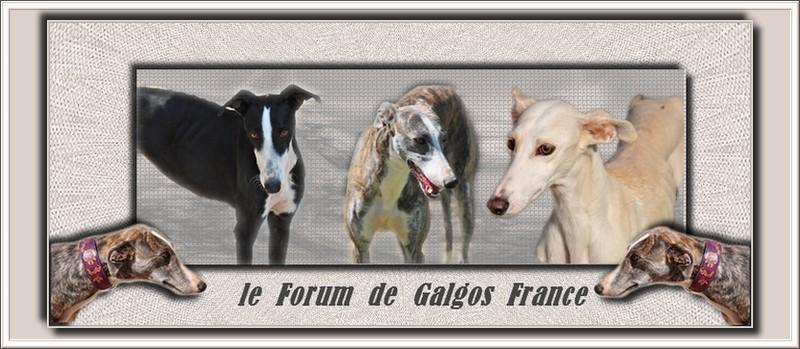 Cadeaux faits sur mon forum pour Galgos France