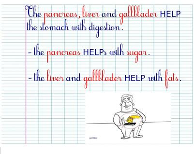 CM1SC - Digestion in a lesson
