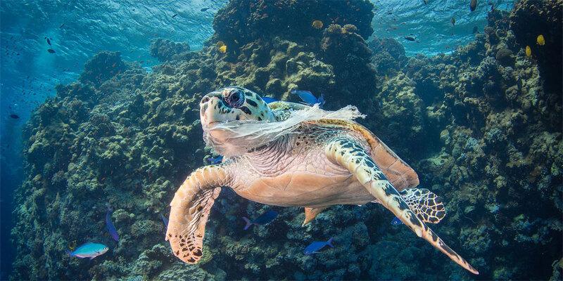 Trente pays unissent leurs forces contre les déchets plastiques en mer