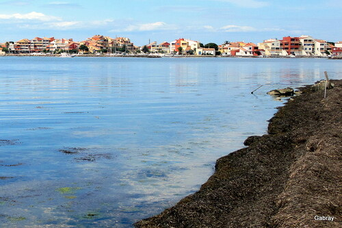 Au Barcarès: bord de l'étang