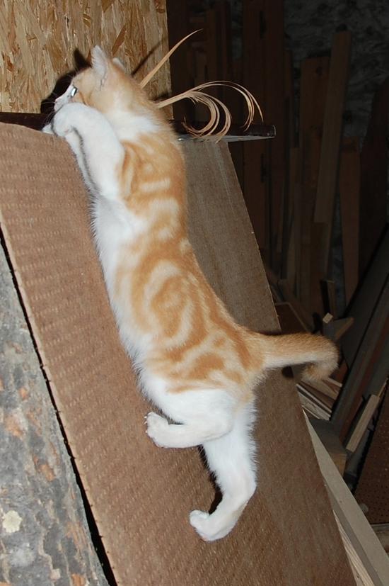 chaton18juilletl