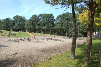 dierenpark emmen d50 045