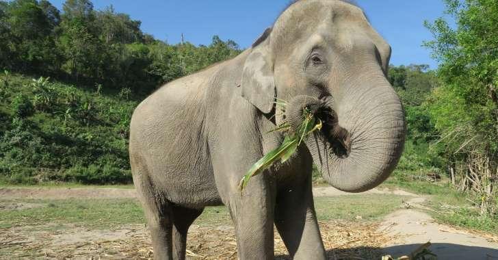 """Elephant Haven : la """"maison de retraite"""" pour éléphants poursuit sa construction dans le Limousin"""