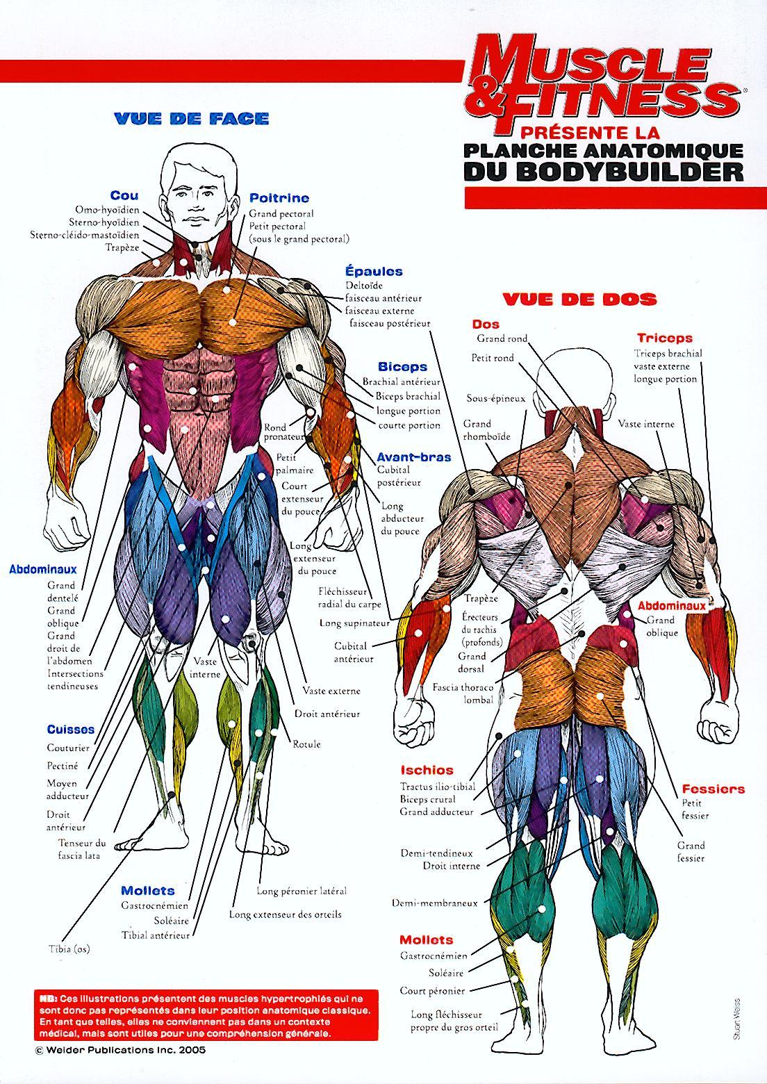 http://ekladata.com/KhdZI0At510NRYxW1WBJlhDaVh4/muscles-planche-anatomique.jpg