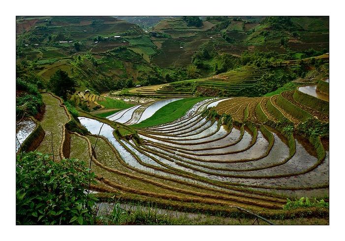 Une rizière par jour 11