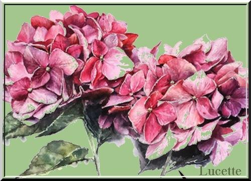 Aquarelle florale