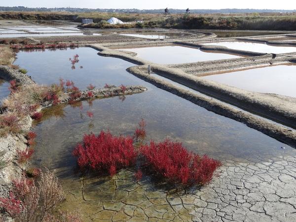 Les marais salants aux couleurs de l'automne