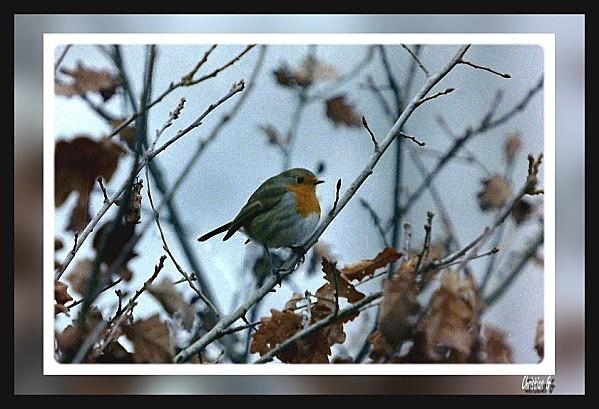 2012-01-23_18-copie-1.JPG
