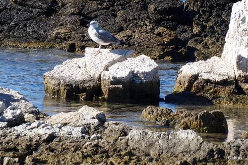 Cannes: oiseaux en bord de mer ...