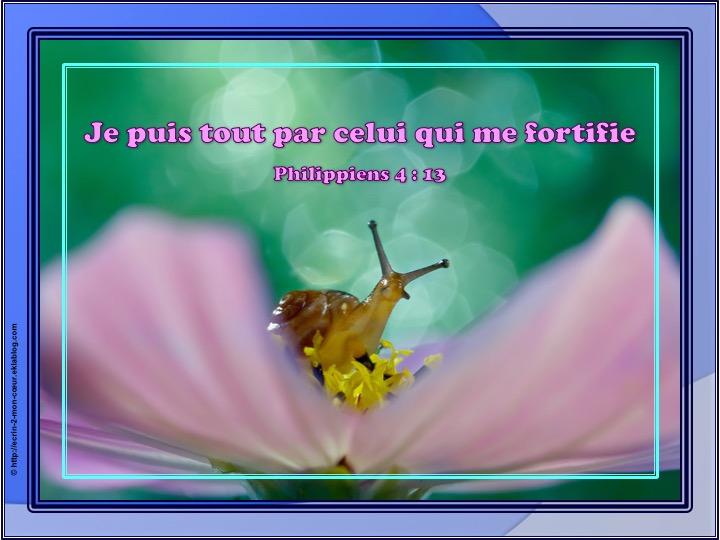 Je puis tout par celui qui me fortifie - Philippiens 4 : 13