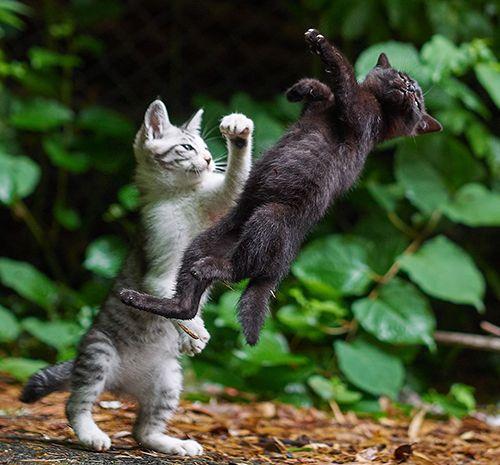 「のら猫拳キッズ」から(撮影:久方広之)