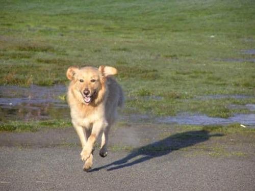 (-*♥*-) La municipalité refusait d'aider le pauvre chien du voisinage, ils ont donc décidé de franchir la clôture eux-mêmes…
