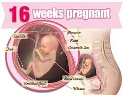 Thai 16 tuần tuổi đã là thai lớn