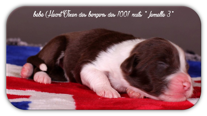 bébé Heart Vixen * femelle 3 ♥