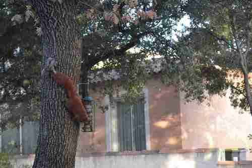 La petite vie des Ecureuils