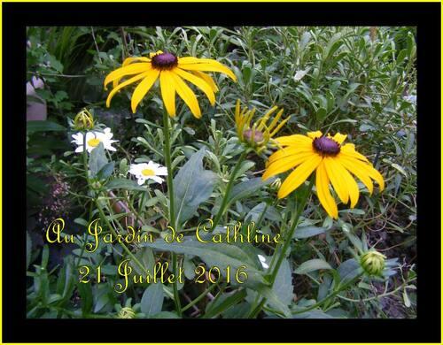 Jardiner avec la lune du 1er au 10 Août