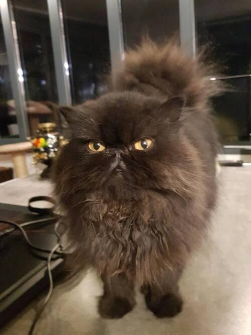 une histoire de chats.. miaou miaou