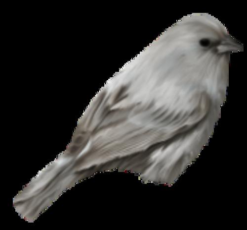 Oiseaux 7
