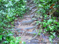 La Montagne des singes/ Guyane
