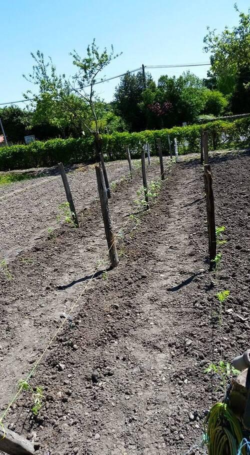 LES PLANTATIONS COMMENCENT