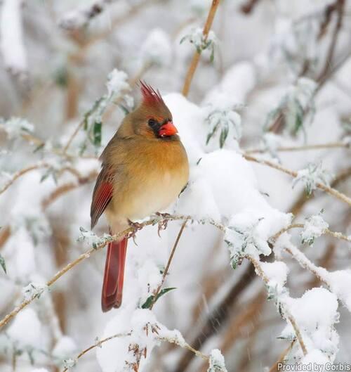 Neige, je veux de la neige !