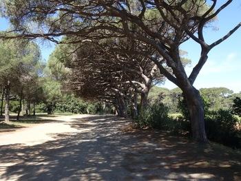Vers le conservatoire botanique