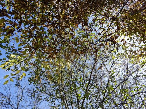 Tapis de feuilles...