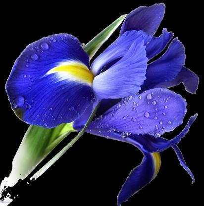 tube fleures pour scrap