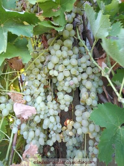 Les raisins secs maison