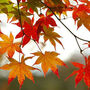 Taches d'automne