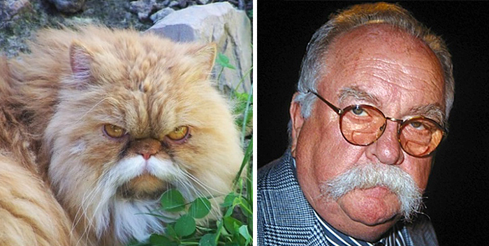cat-looks-like-other-thing-lookalikes-celebrities-4__700