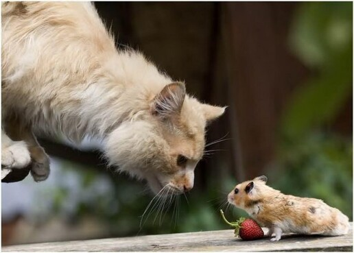 amazing picture : cat vs mouse
