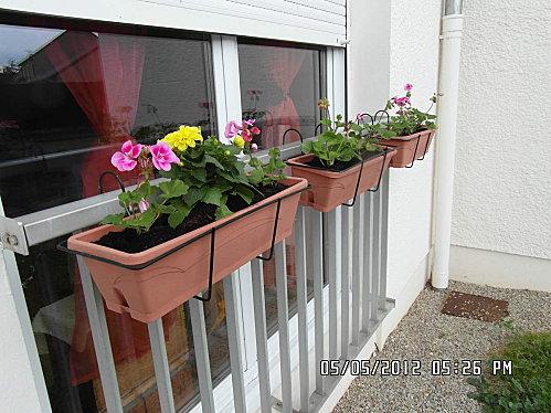 fleurs-010-copie-1.JPG