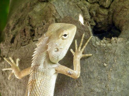 un gecko à l'ombre à défaut de poisson