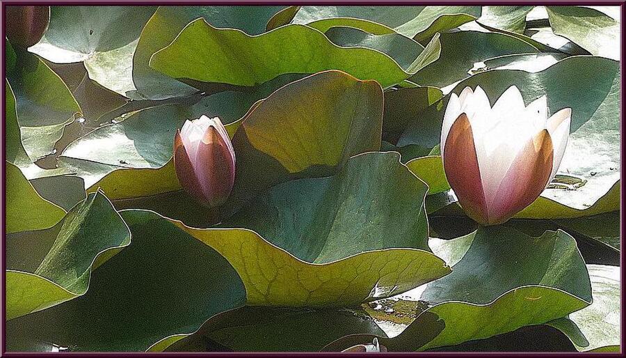 fleurs du jardin botanique,