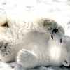 polar_bear_child_4004