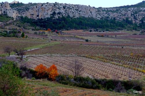 Vingrau : vignes en automne ...