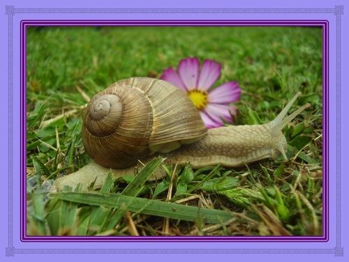 De la richesse d'un escargot