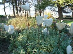 Chabrillan - fleurs de décembre 2015, en pierre plantées sur des fers à béton