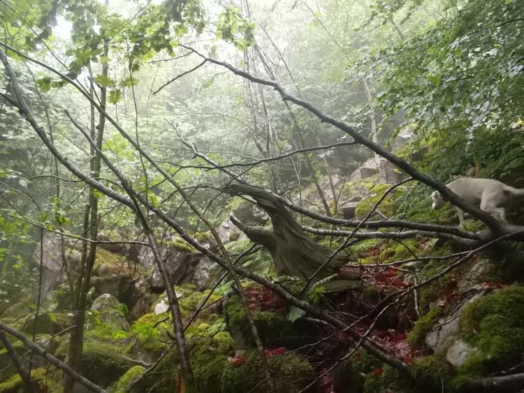 Vosges-la tête des cuveaux/le massif de Fossard