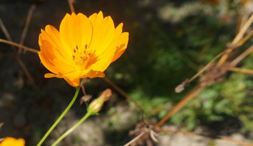 Le jardin aux plantes parfumées à Limoux