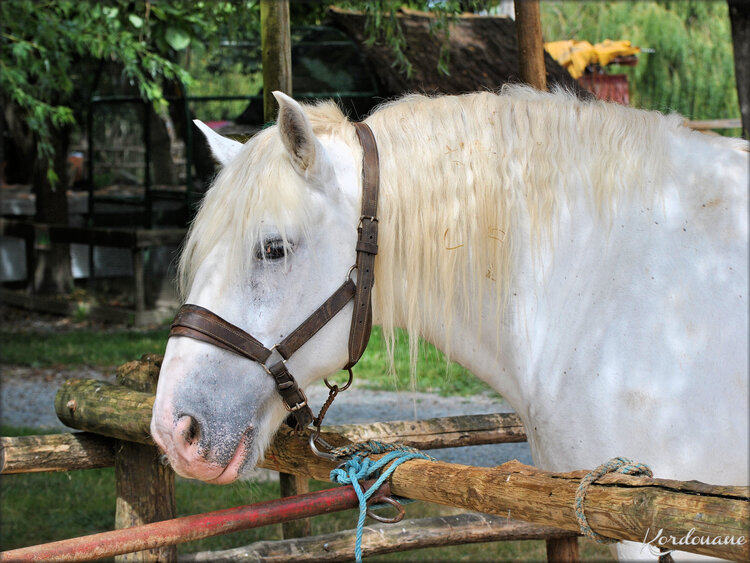 Photo de Percheron Ferme exotique - Cadaujac