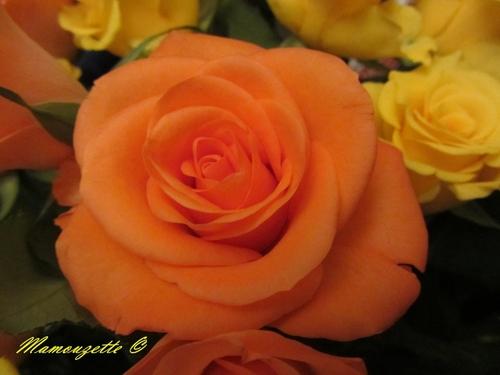 Quelques roses pour vous souhaiter un bon dimanche