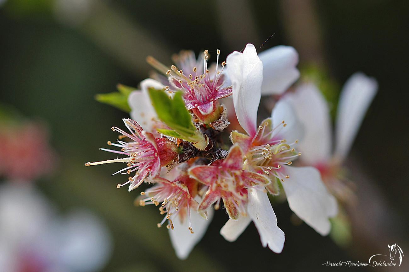 """Les fruitiers """"explosent"""" de fleurs..."""
