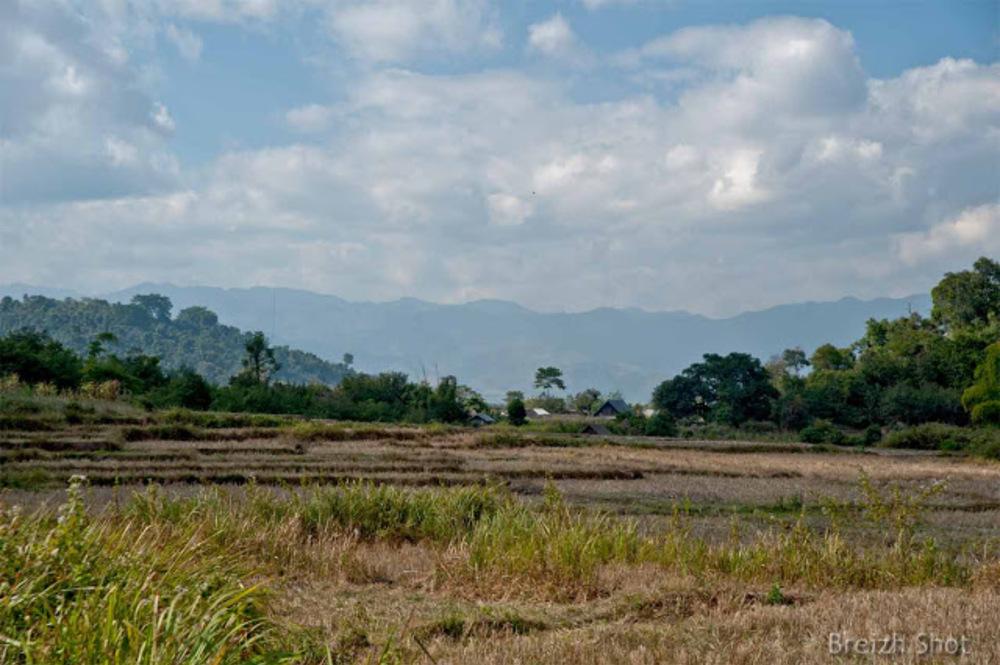 Muang Sing : Paysage de rizière