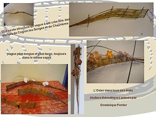 2013 04 ondultation d'osier (7)