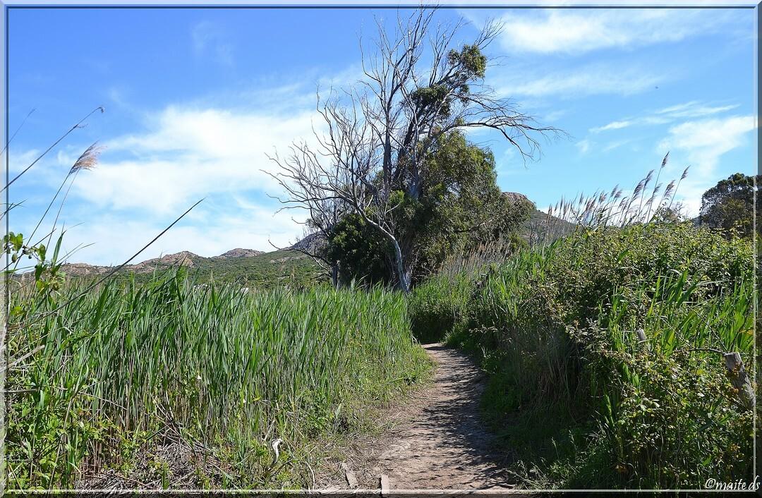Sur le sentier de l'Ostriconi - Corse 16-05-2014