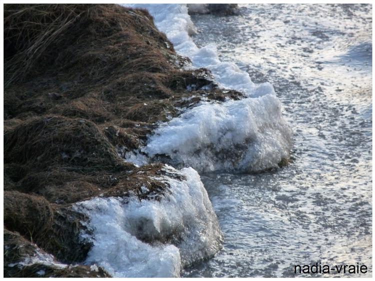 La photo de la semaine: glace sur le bord de l'eau. (Communauté d'Amartia)